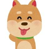 『ワイ足の長さが犬なみと言われてしまう』の画像