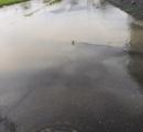 【画像】洪水に立ち向かうザリガニ