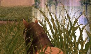 馬「干し草をくちゃくちゃ噛む姿がだるそうに見える。」