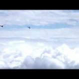 『朝の大空のトンボや鳥たち』の画像