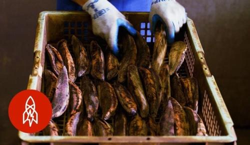 海外「日本の職人気質に感激」鰹節の製造過程を見た海外の反応