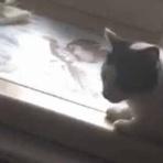 猫の動画 ねこわん!