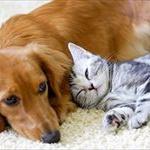ペットとのキスはどれほど危険なのか?