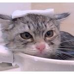 猫を水や風呂に落としたら虐待とか言う奴は異常だよな