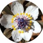『花の季節』の画像
