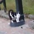 【ネコ】 公園を歩いていると1匹の猫がいた。これ、お願いできますか? → 猫は待っていたようです…
