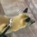 うちのキツネと散歩していた。友だちの犬と出会う。あ、久しぶりぃ! → 2匹はこうなった…