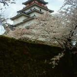 『満開の鶴ケ城』の画像