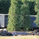 『放置貨車 テキ200形テキ212』の画像