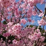 『さぁ❗️お花見デートしましょっ🌸』の画像