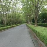 『朝の散歩道』の画像