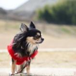 『今年も遠隔で犬っこ祭りに参加できましたっ☆』の画像