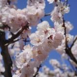 『小岩~お茶の水の春 [写真] RX1』の画像
