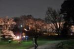 訪れたら感激必須!『枝垂れ桜のライトアップ』が今年も開催!〜植物園で4/6(木)まで〜