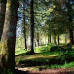 ノルウェー、環境破壊を防ぐために国内の森林伐採を禁止 世界で初