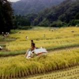 『稲刈り体験会のお礼』の画像