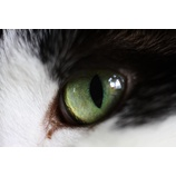 『R Lens on EOS #2 MACRO ELMARIT-R 60mmF2.8』の画像