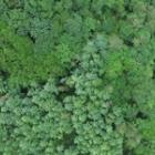 『森の使い分け』の画像