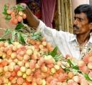 インドの奇病、原因は果物のライチか? - 米疾病対策センター(CDC)