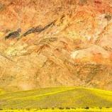 『スーパー開花した死の谷デスバレー』の画像