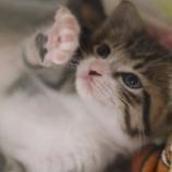 『子猫祭り!!!』の画像