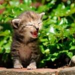 猫がなぜニャーと鳴くかチコちゃんが解説!かわいすぎる理由にネット民興奮!