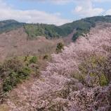『奈良・吉野山にお花見トレッキング!!』の画像