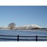 『岩手山と一本桜』の画像