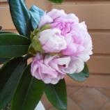 『季節外れの花が咲きました』の画像