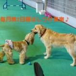 『毎月第2日曜はワンコと飼い主様のための「しつけ教室」』の画像