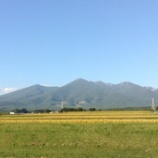 『稲、色づく頃』の画像