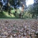 群馬の森公園に再び。