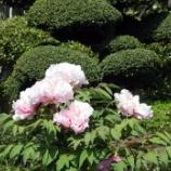 『4月の花⑧』の画像