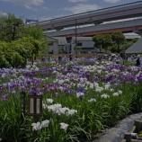 『【動画】堀切菖蒲園(2017年6月)』の画像