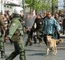 ギリシャの「デモ犬」死ぬ 警官にほえ、世界で注目