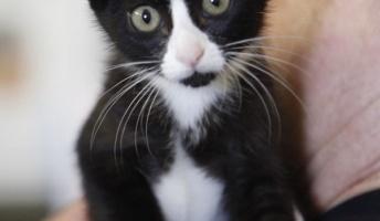 【ぬこ】靴下猫の画像を置いておきます