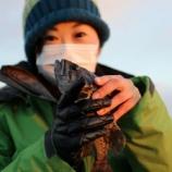 『1月10日 釣行 ロックフィッシュ クロソイMAX53! 12匹!』の画像