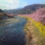『一足早い春』の画像