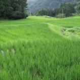 『草刈り日和から一転、大雨でついに大雨洪水警報まで発令』の画像