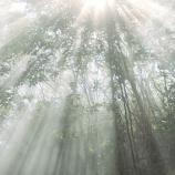 『朝の光のシャワー』の画像