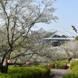 『桜の名所を訪ねて2018・西海橋公園編』の画像