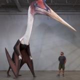 【画像】「ケツァルコアトルス」とかいう翼竜、ガチでヤバかった