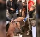 【動画】地下鉄の車内で犬(ピットブル)が人の脚に噛みつく。しかもなかなかはなさない