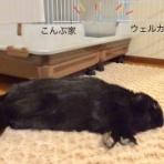 ぶ〜に〜の暮らし