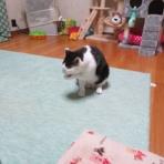 8猫8柄+α日記