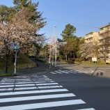 『◆【ココロを豊かに暮らしたい】:朝の散歩。2 〜桜の頃〜』の画像