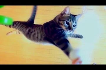 猫の本気の垂直飛びが凄すぎる……