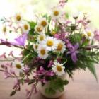 『5月の庭仕事【アブラムシ、クビナガハムシ、バラゾウムシなどの害虫対策】』の画像