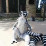 動物園の一日