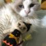 カルディの猫とボール、どっちが好き?